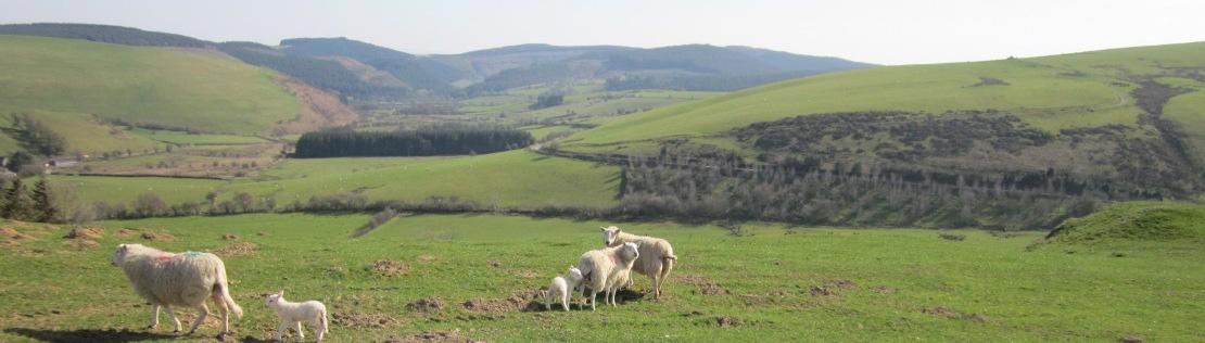 Glyndwr's Way walking holiday