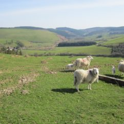 Glyndwr's Way Walking Holiday